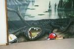 Go Gators Mural